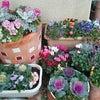 お花達の画像