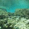 青の洞窟は行けませんが・・・サンゴビーチはとっても綺麗!!青の洞窟ツアーなら専門店のテイクダイブの画像