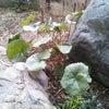 寒いけど庭の掃除の画像