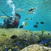 青の洞窟は今日もお預け・サンゴビーチで体験ダイビング!!行ってきました 青の洞窟ならテイクダイブの画像