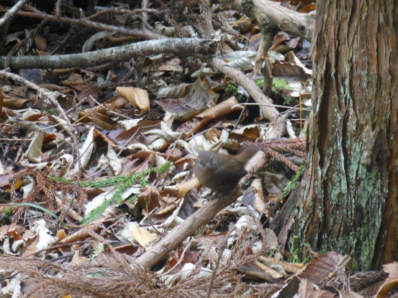 英彦山の登山道入口で野鳥がお出迎え