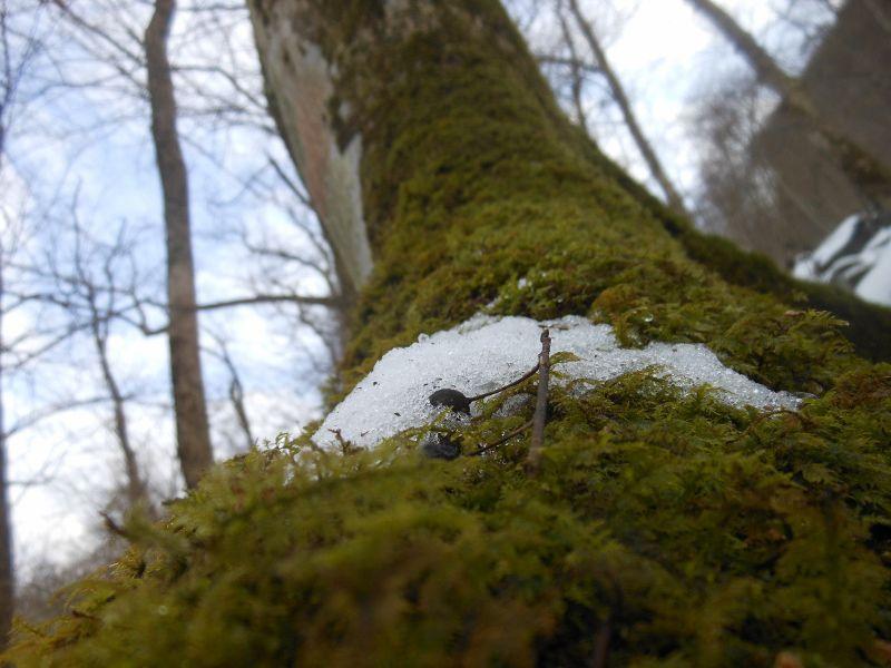 樹木を覆う苔道と雪の欠片