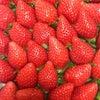 多田さんの苺の季節、到来♪の画像