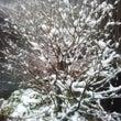 奥飛騨は雪です!