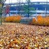 岡山県総合グラウンドの画像