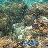 【青の洞窟】に行けなくても、こんなキレイな海でシュノーケルが一年中楽しめるよ!!の画像