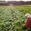 自然農法の畑に♪の画像