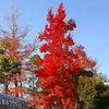 岡山県総合グラウンド 「紅葉、彩りと輝き」の画像