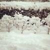 雪だね。の画像