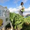 ワイワイ農園⑱ 実り実る、冬!の画像
