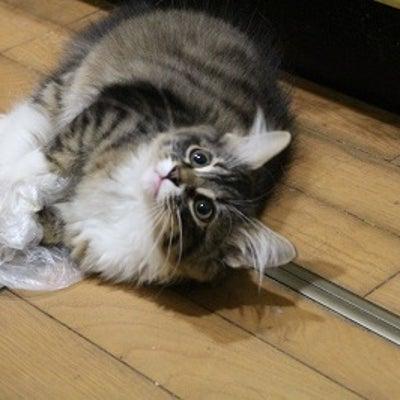 猫伝染性腹膜炎(FIP)について②の記事に添付されている画像