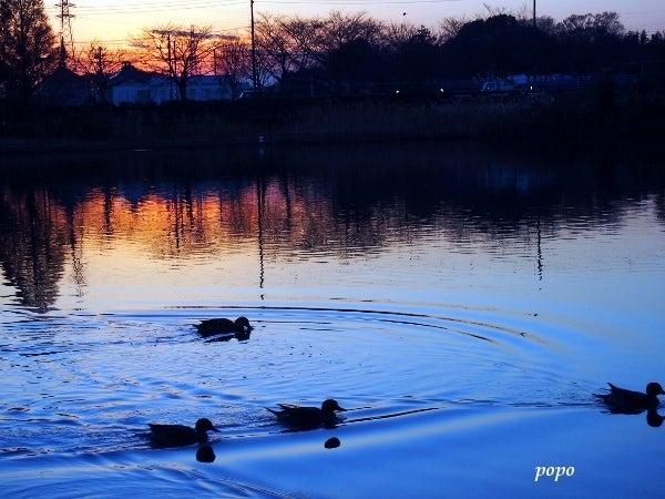 夕暮時の水面に映った木々と波紋01