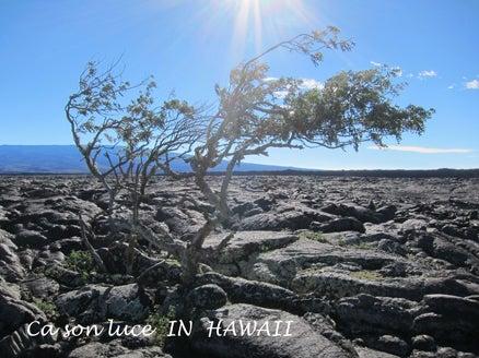 20141217マウナケア途中溶岩