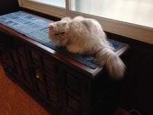 猫onサイドボード