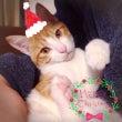 メリークリスマス☆イ…