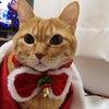 ♪メリークリスマスの画像