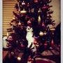 クリスマスですなぁ。