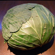 cabbage。
