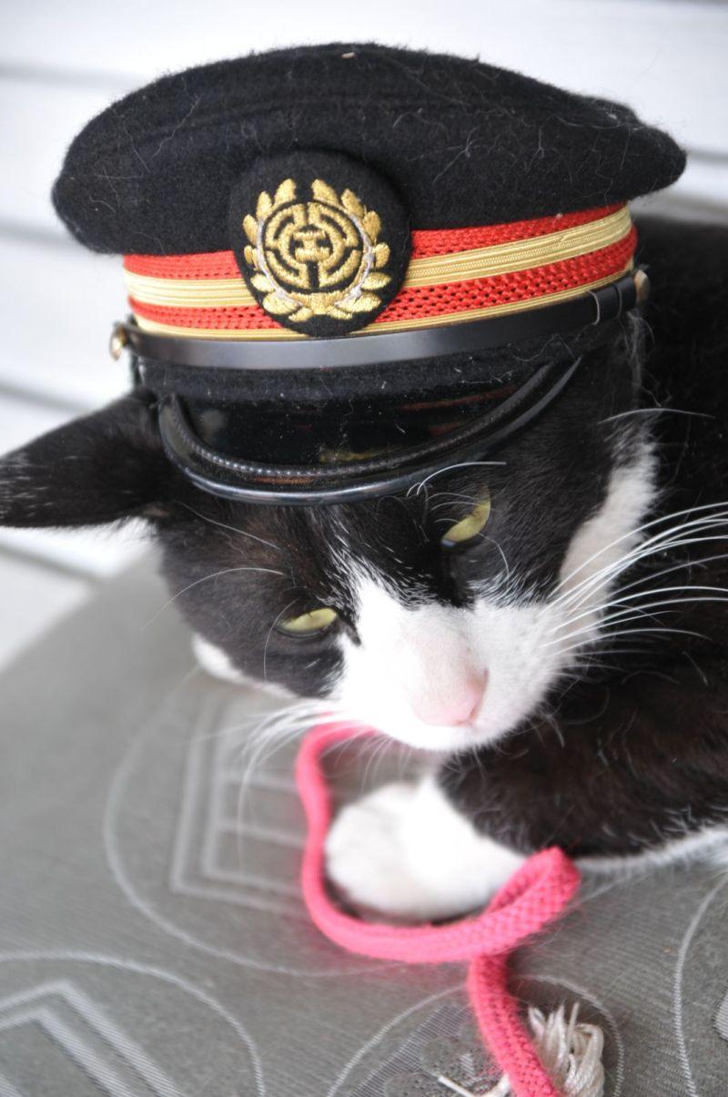 二代目駅長猫のホトフも元気やで