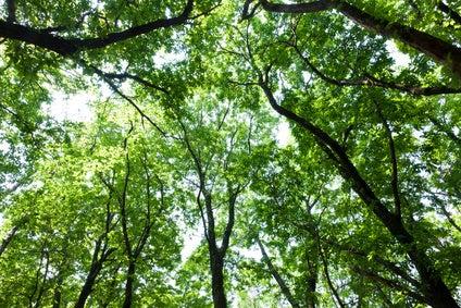 緑のイメージ 新緑