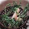 七草粥の日の画像