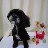 今年初めてのトータルケアセラピストfor dogのセミナースタートの画像