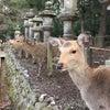 春日大社で鹿三昧♪の画像