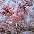 春が待ち遠しいです。