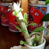 うちの植物たちの画像