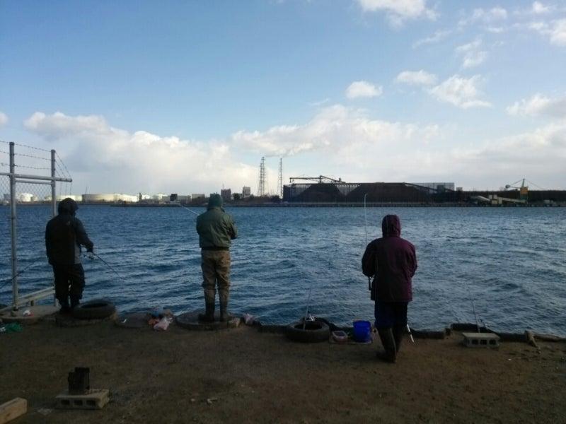 新潟東港でサヨリとイワシを釣る...