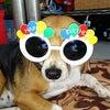今日はテイクダイブの看板娘Chocoちゃんの誕生日です!!青の洞窟&パラセーリングのテイクダイブの画像