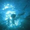 青の洞窟シュノーケル♪に行って来ました!明日はサイドマウントDay!!青の洞窟ならテイクダイブ♪の画像