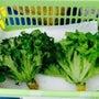 野菜の底力を味わう「…