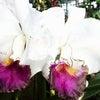 【咲くやこの花館】85Thの画像