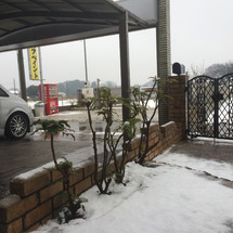 久しぶりの大雪です。