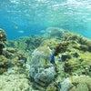 青の洞窟は高波で中止でも♪サンゴビーチでシュノーケル&体験ダイビング!青の洞窟ならテイクダイブ♪の画像