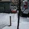 雪⛄ですねの画像