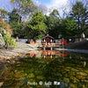 下鴨神社の画像