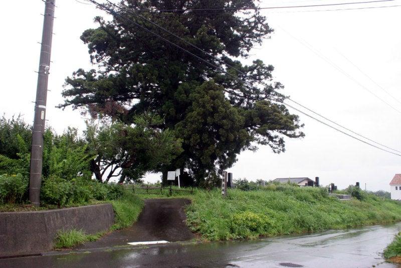 松岡古城/①大木が目印