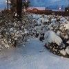 大雪?の画像