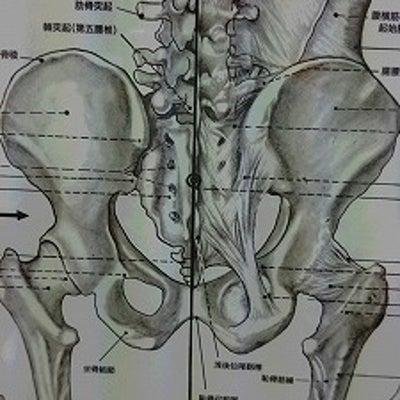 骨盤の「ゆがみ」を整えるってどういうこと?の記事に添付されている画像