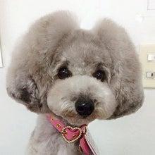 バズスタッフ犬