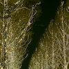 ロームのイルミネーションの画像