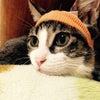 ホクちゃんと猫白血病の画像