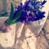 La Vie en Fleurs♪の画像