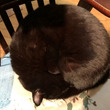 今日は猫の日なので猫…