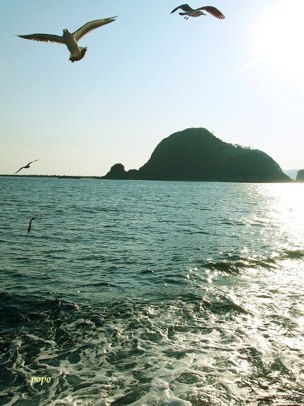 ウミネコと海02