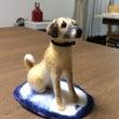 愛犬モンちゃん!
