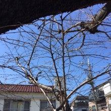 花見シーシャ東京