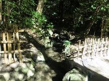 椿大神社14